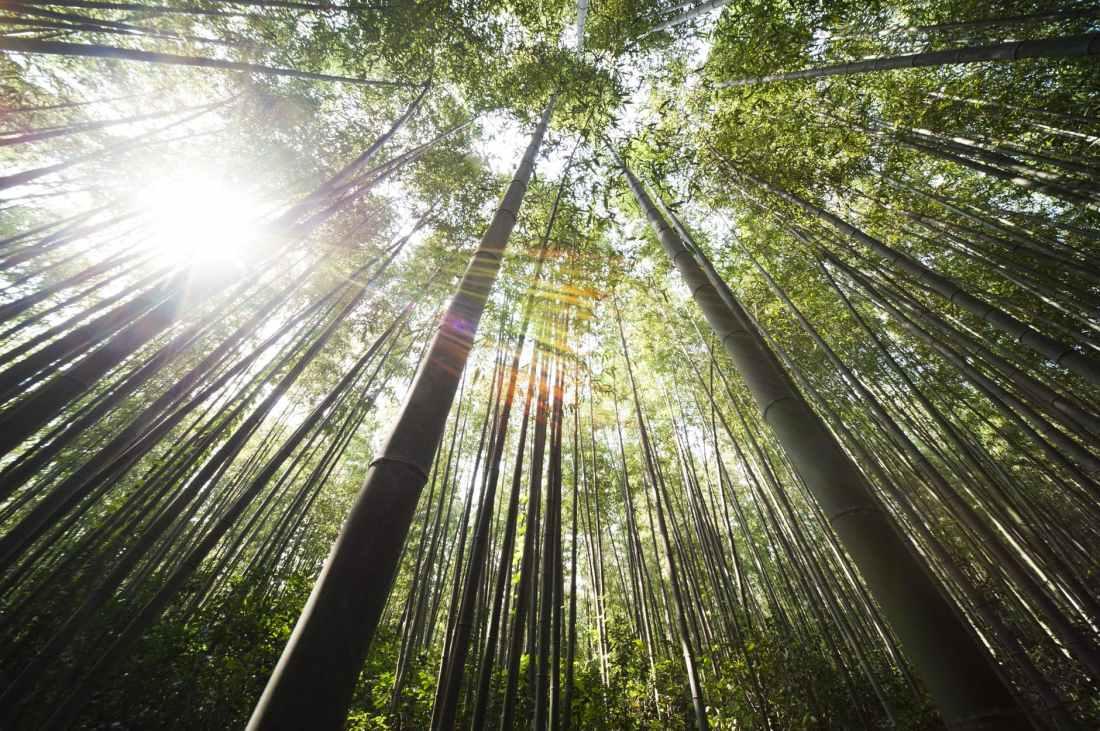 sunshine bamboo damyang